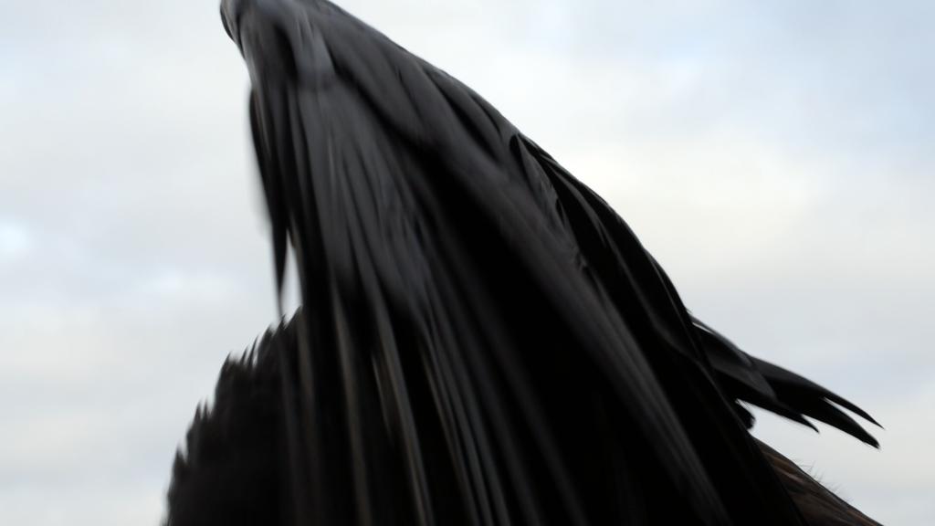 raaf vleugelkopie